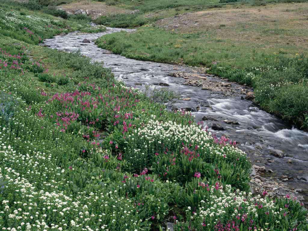 Creek Through A Meadow JPG
